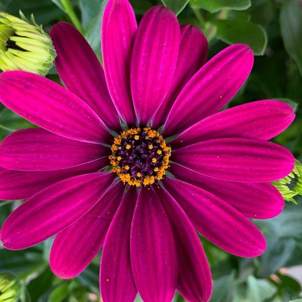 Hands Garden Center | Flowers